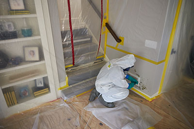Image result for mold removal service